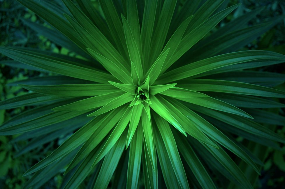 looking down on a large green tropical plant